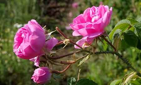 flowers-mohammadi-01.jpg